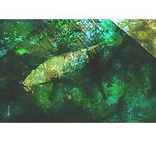 rainforest waters Photographic Print