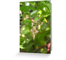 Poisonous Beauty Greeting Card