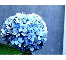 Feeling Blue Photographic Print