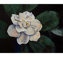 Gardenia Oil Painting Photographic Print