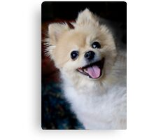 Bright -Eyed and Bushy-Tailed Canvas Print