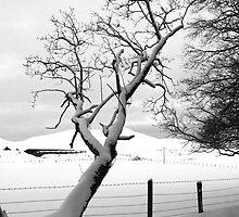 A Leaning Tree by Lynne Morris