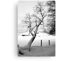 A Leaning Tree Canvas Print