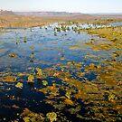 Wetlands , Kakadu National Park, Northern Territory.  by Bill  Russo