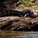 Crocodile, Kakadu National Park, Northern Territory.  by Bill  Russo