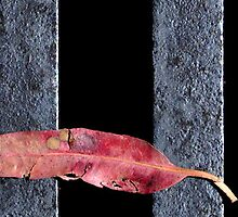 Leaf on grate by GiulioSaggin
