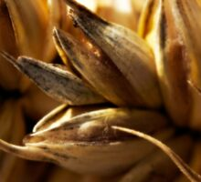 Wheat Macro Photo Sticker
