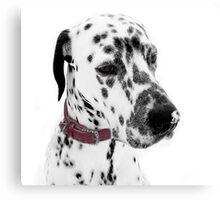 Dalmatian Julius snowkissed  Canvas Print