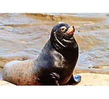 Sea Lion Sunning Photographic Print