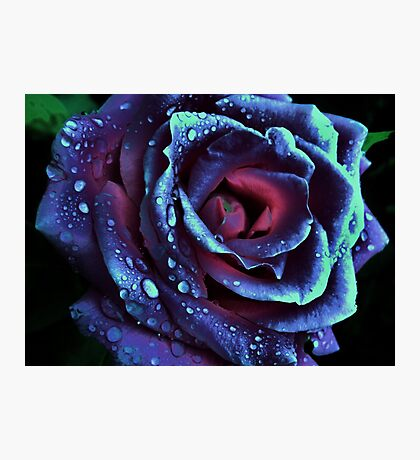 Beautiful Rose in Blue Photographic Print