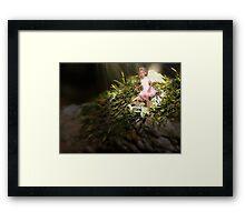 'Angel Under Macro' Framed Print