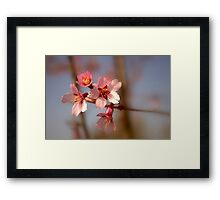 Upton Colours Framed Print