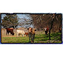 Longhorn Afternoon Photographic Print