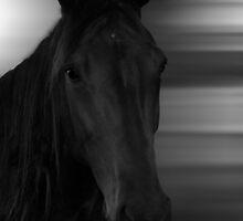Dark Horse by Emma Hardcastle