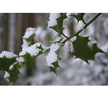 Snowy Holly Photographic Print