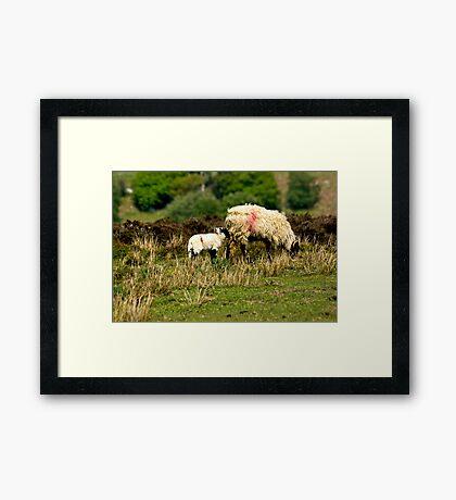 On the Moors Framed Print