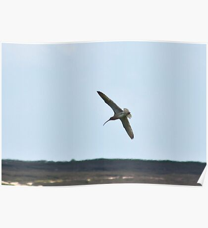 Curlew above the Moors Poster