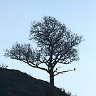 Morning Tree by SWEEPER