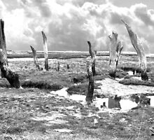 Dead Tree Trunks in the Salt Marshes by johnny2sheds