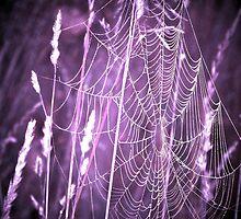 Purple Web by mark4321