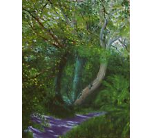 Dappled Light, Killynether Wood Photographic Print
