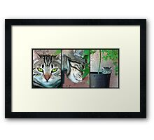 Growing Kittens Framed Print