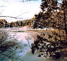 Winter Wonderland In Georgian Bay by Barry W  King