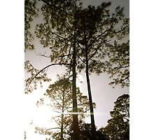 Matchstick Trees-Somewhere in Florida Photographic Print