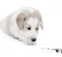 Bonzo the Snow Rescue Puppy by Ritva Ikonen