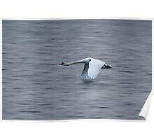 Swan inflight Poster