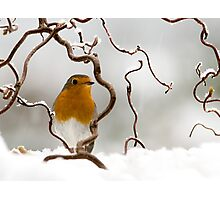 Let it snow! Photographic Print