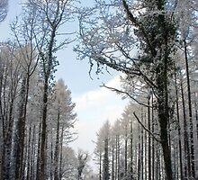Winter in Buckholt Wood  by missmoneypenny