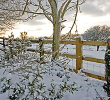 Snow fall Dartmoor  by DIANE  FIFIELD