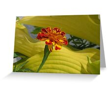 Little Marigold Greeting Card
