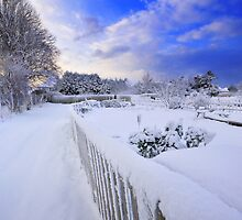 winter garden by Zuzana D Photography
