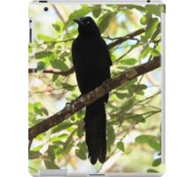 Great-Tailed Grackle iPad Case/Skin