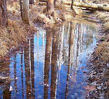 Reflective Woodlands by Dandelion Dilluvio