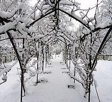 Snow Run by Tom Clancy