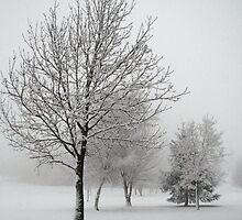 Winter trees by Victoria Kidgell