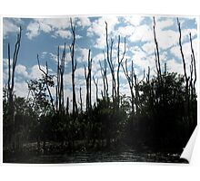 Trees and Clouds- Florida Everglades Poster