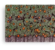 Orange Fruit Trees in Grove Canvas Print