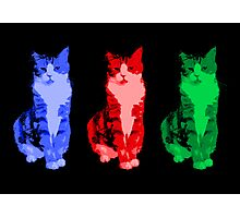 Grumpy Pop Art Cat Photographic Print