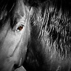 Brown Eyes  ~ Horse by Jan  Tribe