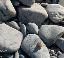 Butterfly on Rocks by mmcc0713