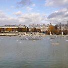 Jardin des Tuileries, Paris '09 by Elsa Thorp