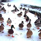 Ducks in the Snow by Louise Norman