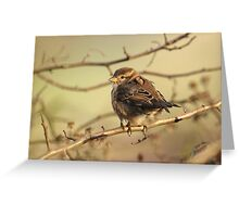 House Sparrow Chick Greeting Card