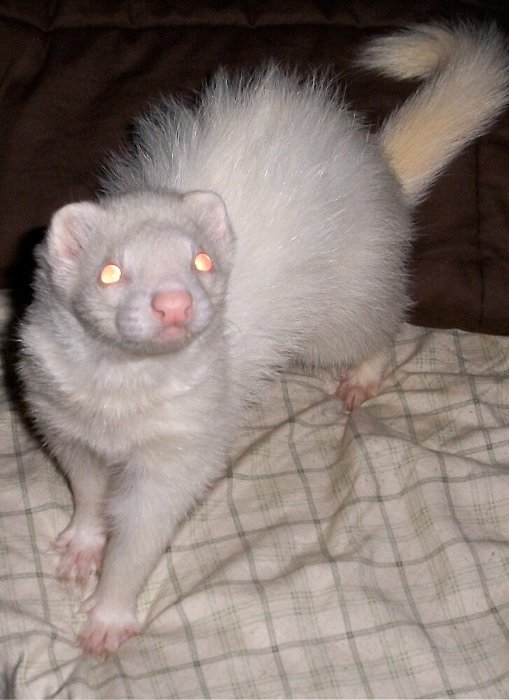 FERRETS JUST WANNA HAVE FUN by Scratch