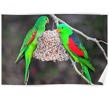 Red Wing Parrots Poster
