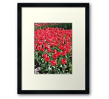 Red Army - Keukenhof Tulips Framed Print